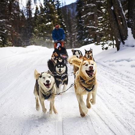 كلاب التزلج على الجليد
